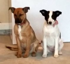 lizardmarsh: Winder GA - URGENT!  - Two pups need rescue or forever home, ASAP!! - Currently living in a garage!