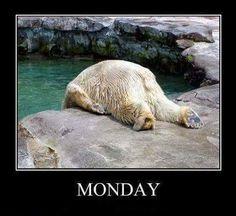 20 Best Polar Bear Memes Images Funny Animals Polar Bears