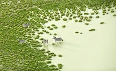 Southern Africa by Zack Seckler | Yellowtrace
