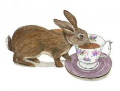 """""""Tea with Peter Rabbit"""" Peter Rabbit, My Drawings, Childrens Books, Things That Bounce, Whimsical, Bunny, Illustration, Animals, Tea"""