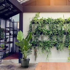 Plastic Planters, Plastic Flower Pots, Flower Planters, Big Plants, Cool Plants, Potted Plants, White Planters, Outdoor Planters, Succulent Pots