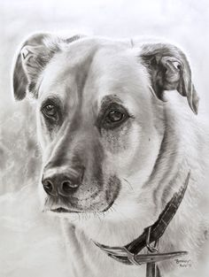 """Original oil painting dog portrait """"Barney""""  Dry brush on paper by Rudy Vandecappelle of RmV Portraits Art"""