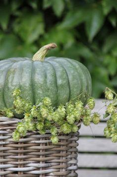 Pumpkin. Beautiful color.
