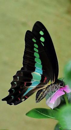 ◑≈◑≈◑≈◑ Butterfly ◑≈◑≈◑≈◑  via Deb Portman