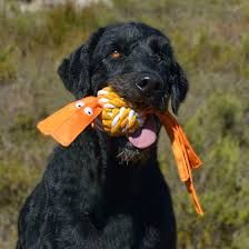 ROGZ Cowboyz Dog Knot Toy Large Colors Vary *** Visit the image link even more details. (This is an affiliate link). Holiday Gift Guide, Holiday Gifts, Curly Coated Retriever, Cowboys 4, Dog Facts, Teeth Cleaning, Dog Toys, Labrador Retriever, Pets