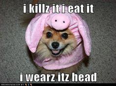 The fluffy assassin...