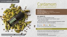 dōTERRA's Cardamom essential oil comes from seeds grown in Guatemala. Commonly used for cooking and baking, Cardamom essential oil is also known for its powerful ability to reduce indigestion and nausea, promote digestion, and support a healthy respiratory system.