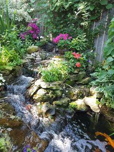 Aquarium, Backyard, Plants, Aquarius, Yard, Fish Tank, Backyards, Flora, Plant