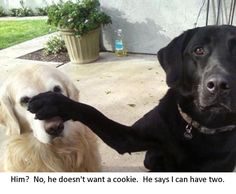 He doesn't want cookie I can have two Funny dog photo with captions
