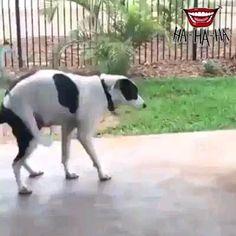 Funny Animal Jokes, Funny Animal Pictures, Animal Memes, Cute Funny Dogs, Cute Funny Animals, Cute Cats, Funny Dog Videos, Cute Funny Baby Videos, Animal Antics