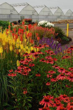 My Favorite Plant Combinations 50 (My Favorite Plant Combinations design ideas and photos Garden Shrubs, Garden Plants, Beautiful Flowers Garden, Beautiful Gardens, Flowers Perennials, Planting Flowers, Flower Gardening, Garden Pictures, Plantation