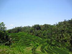 Terraced rice paddies are the verdant hallmarks of Bali's highlands. #FSJet