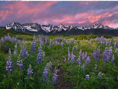 Alpine Meadow, San Juan Mountains, Rocky Mountains, Colorado