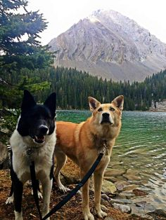 Canada/Alaska/Europe