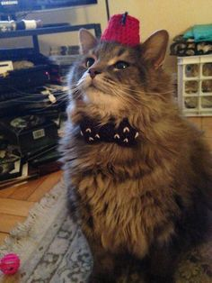 DIY knit A Cat Wearing A Dr. Who Fez And Bow Tie