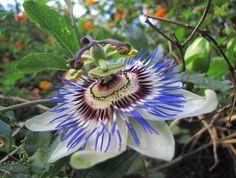 Plantas nativas: ¿por qué cultivarlas en tu jardín?