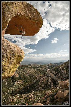 Goosehead On Mount Lemmon, Arizona