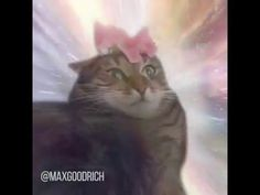A flower grants this kitty the knowledge of the universe. Song: Mountains from the Interstellar soundtrack Voice: Morpheus from the Matrix Subscribe for more!