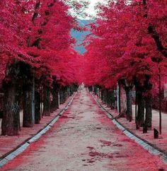 Pleasant path