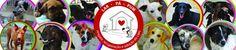 BONDE DA BARDOT: RJ: Lindos filhotes do Lar Pá Pum esperam famílias amorosas
