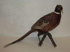 JAGDFASAN Fasan Tierpräparat Präparat alt ausgestopft Tier Vogel 70cm Jagd Wild