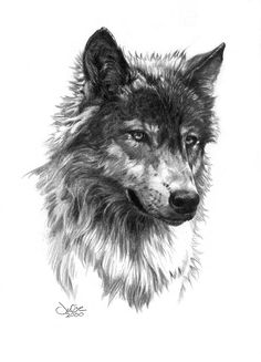 Wolf Head by Julie Bell | Graphite Wolf Drawing | SOLD