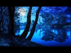 Soothing Night Time Forest Sounds - 2 Hour Ambient Soundscape - For Slee...