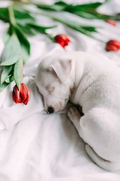 Some Helpful Ideas For Training Your Dog. Loving your dog does not mean you are willing to let him go hog wild on your possessions. That said, your dog doesn't feel the same way. Baby Puppies, Cute Puppies, Dogs And Puppies, Newborn Puppies, Adorable Dogs, Animals For Kids, Animals And Pets, Cute Animals, Puppy Pictures