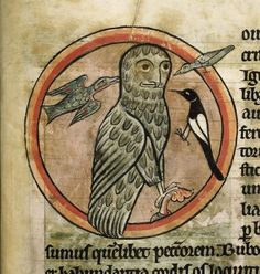 This owl has HAD IT with all these fucking tiny birds pecking its man-face. | 44 Medieval Beasts That Cannot Even Handle It Right Now