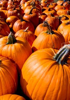 Pumpkin-Patch Marketing: How To Attract A Blizzard Of Clients With No Budget, No Advertising And No Connections