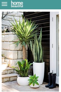 White tall planters with succulents