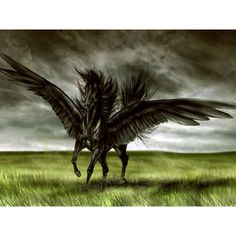 Free the black winged horse Wallpaper - Download The Free the black... ❤ liked on Polyvore