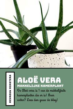 De Aloë vera is 1 van de makkelijkste kamerplanten die er is! Wil je meer weten over deze stoere kamerplant? Lees dan gauw deze blog! Small Plants, Indoor Plants, Propagation, Houseplants, Aloe, Eco Friendly, Nature, Seeds, Inside Plants
