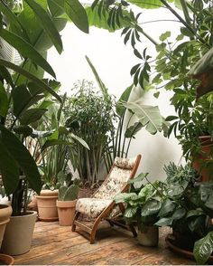 Stunning Indoor Garden Rooms Design Ideas You Must Copy - Gardening is one of the best pastimes. After a hard day's work, all that stress from work seems to disappear once you get a glance of your beloved pla. Plant Aesthetic, Decoration Plante, Plant Design, Outdoor Plants, Winter Garden, Plant Decor, Indoor Garden, Houseplants, Planting Flowers