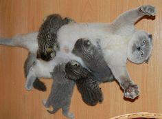 animal, motherhood, funny, cute