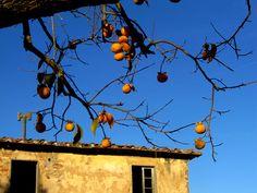 Diosperi - Bachicche | Flickr – Condivisione di foto!