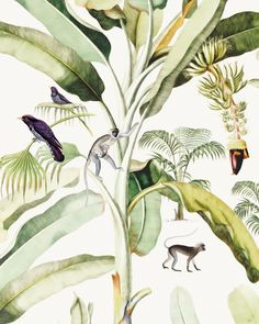 Non-woven wallpaper in custom sizes. Baby Bananas a gorgeous leavy design with cute monkeys and lovely green tones. Transform your room to a beautiful jungle! Jungle Illustration, Pattern Illustration, Print Wallpaper, Room Wallpaper, Kids Prints, Baby Prints, Feng Shui, Jungle Pattern, Creative Labs