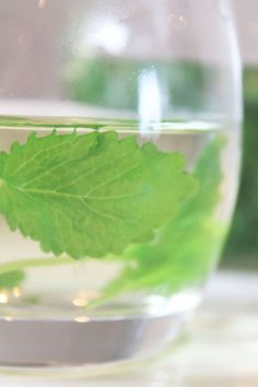 Uses for Lemon Balm Home Remedies, Natural Remedies, Lemon Balm Tea, Health And Wellbeing, Glass Vase, Health And Beauty, Medicine, Herbs, Gardening
