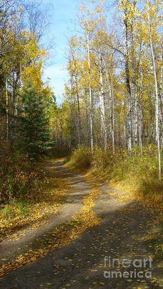 🇨🇦 Winding road through the aspens in the fall (Alberta) by Jim Sauchyn cr. Landscape Photography Tips, Tree Photography, Landscape Photos, Landscape Art, Landscape Paintings, Photography Lighting, Flash Photography, London Photography, Photography Camera