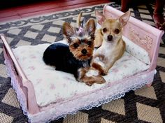Beds for your #pet: as cute as they are!   http://blog.homesav.com/2012/06/fun-fur-paws-down-a-selection-of-the-most-stylish-pet-beds-on-the-market/