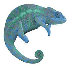 12 Chameleon #1 Wall Decal! Sticker Graphic Removable Reusable HD Animal Kids Room Lizard Reptile Disappear Blend Colors Photo for Home Office Nursery Decor
