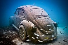 This Concrete VW Beetle is an Artificial Reef Offering Luxury Lobster Living Accommodation