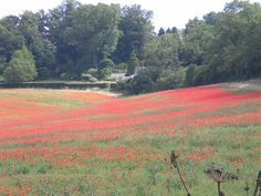 A nice picture of poppies near Cudham, Kent to start my board