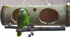 Toca Dupla De Bambu Para Papagaios, Cacatuas E Viveiros - R$ 130,00