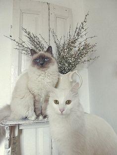 beautiful cats.