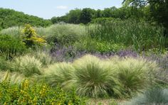 Perennials and ornamental grasses create a stunning meadow on Long Island.