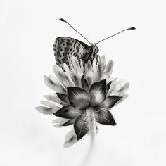 moth on a flower