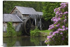 Positive Energy Fine Art Photo Rhododendron Blossoming at Mabry Mill