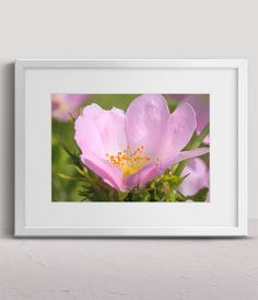 Close-up of a Dog Rose by Tim Abeln Photography and Digital Art Prints Beautiful wall decoration for your home and office. Decorate your home, for example with this colorful dog rose (rosa canina). Check the gallery to see more of my work. #art #flower #flowers #homedecor #artforsale #interiordesign #rose #love #inspiration #photography