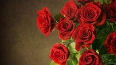 ROSES OR rose flowers. Have you ever wondered that a rose flower can actually shower you with numerous health benefits that you ever thought of? This flower exerts a positive effect on your body, mind and skin and has been used since ancient times. Red Rose Pictures, Rose Flower Photos, Red Rose Flower, Flower Pictures, Red Flowers, Flower Colors, Pictures Images, Spring Flowers, Red Flower Wallpaper